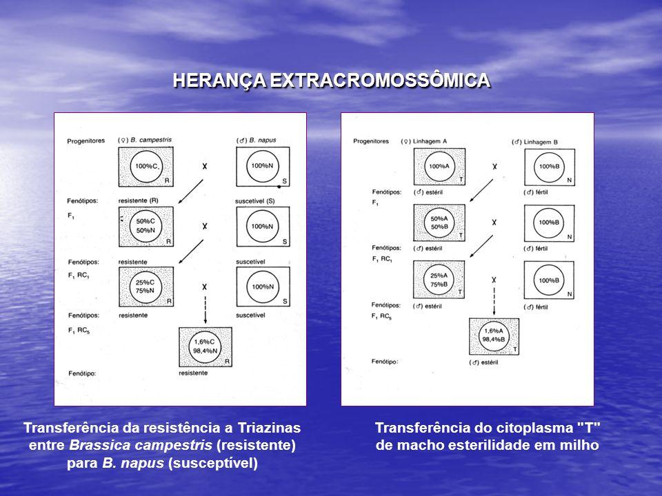 HERANÇA EXTRACROMOSSÔMICA Transferência da resistência a Triazinas entre Brassica campestris (resistente) para B. napus (susceptível) Transferência do