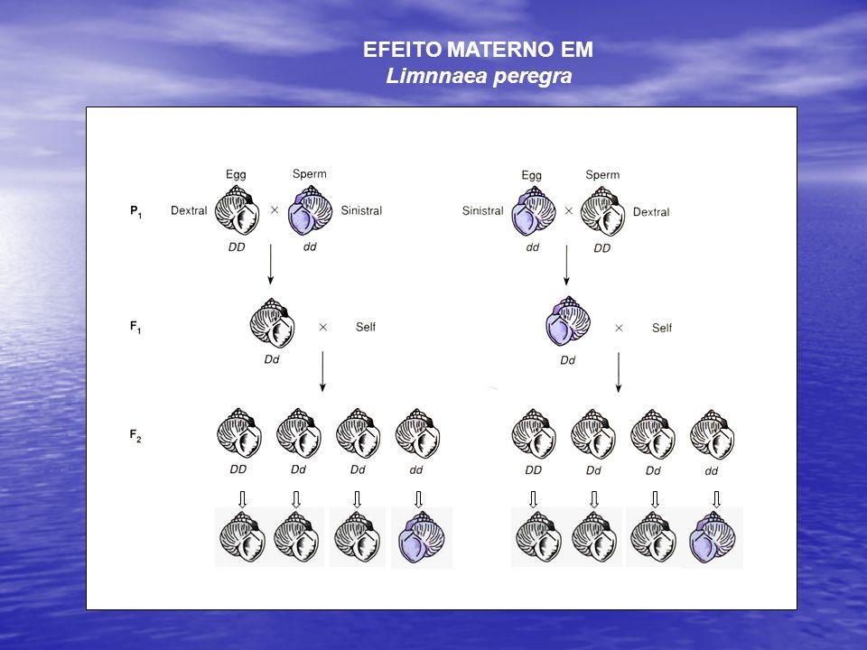 Efeito materno no teor de proteína do feijão