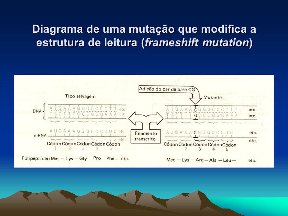 Diagrama de uma mutação que modifica a estrutura de leitura (frameshift mutation)