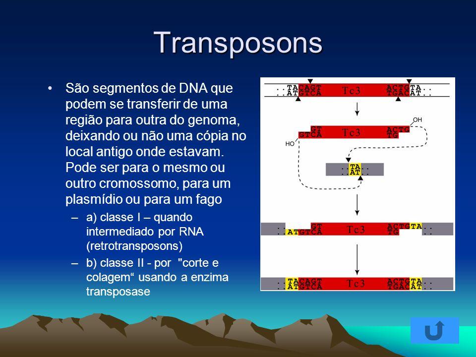 Transposons São segmentos de DNA que podem se transferir de uma região para outra do genoma, deixando ou não uma cópia no local antigo onde estavam. P