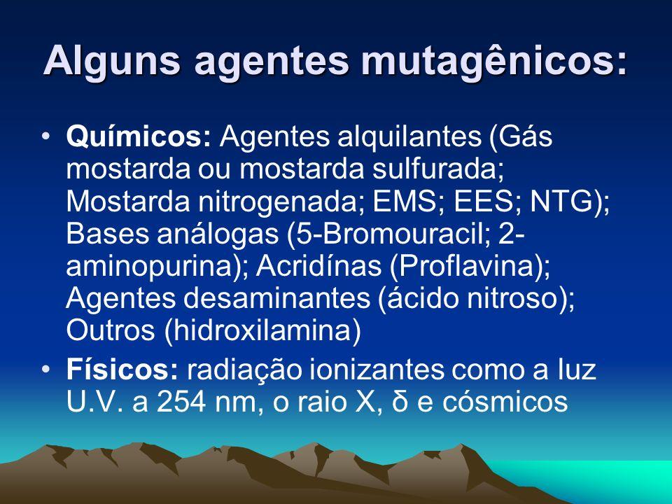 Alguns agentes mutagênicos: Químicos: Agentes alquilantes (Gás mostarda ou mostarda sulfurada; Mostarda nitrogenada; EMS; EES; NTG); Bases análogas (5