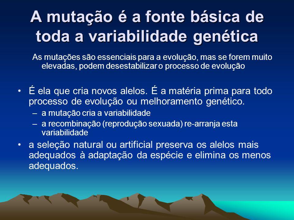 A mutação é a fonte básica de toda a variabilidade genética As mutações são essenciais para a evolução, mas se forem muito elevadas, podem desestabili