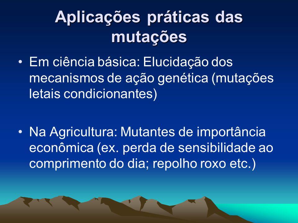Aplicações práticas das mutações Em ciência básica: Elucidação dos mecanismos de ação genética (mutações letais condicionantes) Na Agricultura: Mutant