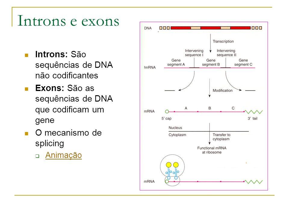 Introns e exons Introns: São sequências de DNA não codificantes Exons: São as sequências de DNA que codificam um gene O mecanismo de splicing Animação