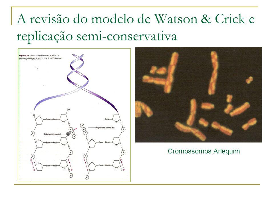 A revisão do modelo de Watson & Crick e replicação semi-conservativa Cromossomos Arlequim