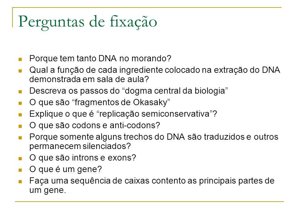 Perguntas de fixação Porque tem tanto DNA no morando? Qual a função de cada ingrediente colocado na extração do DNA demonstrada em sala de aula? Descr