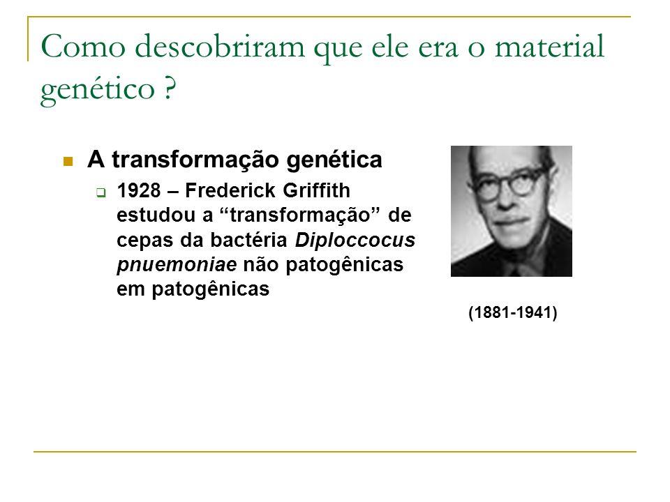 Como descobriram que ele era o material genético ? A transformação genética 1928 – Frederick Griffith estudou a transformação de cepas da bactéria Dip