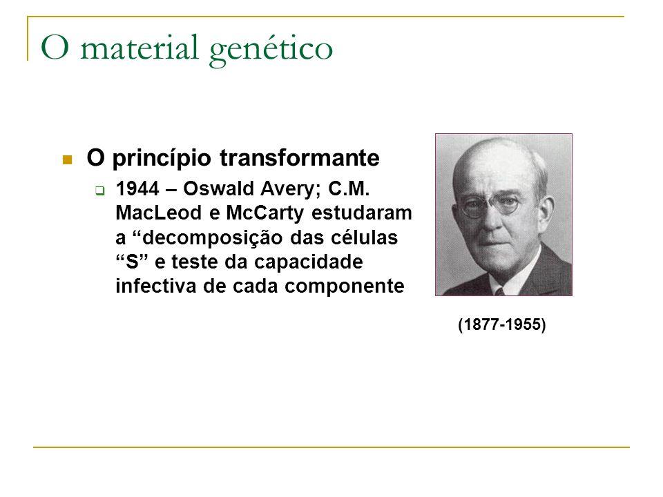 O material genético (1877-1955) O princípio transformante 1944 – Oswald Avery; C.M. MacLeod e McCarty estudaram a decomposição das células S e teste d