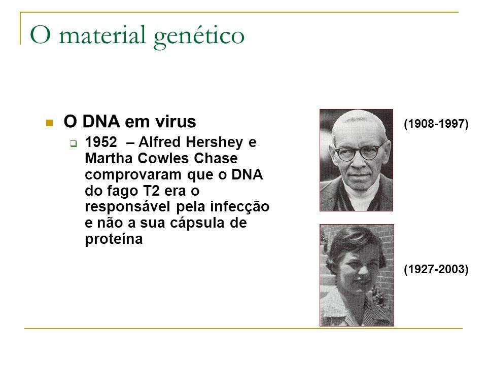 O material genético O DNA em virus 1952 – Alfred Hershey e Martha Cowles Chase comprovaram que o DNA do fago T2 era o responsável pela infecção e não