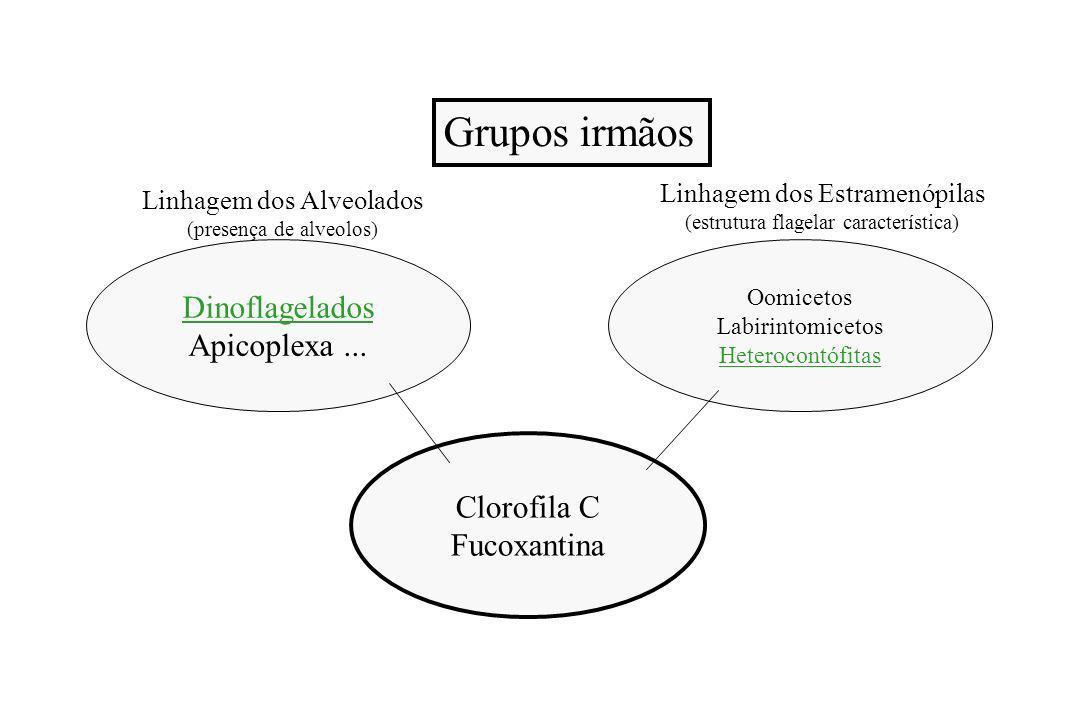 Clorofila C Fucoxantina Linhagem dos Estramenópilas (estrutura flagelar característica) Dinoflagelados Apicoplexa...