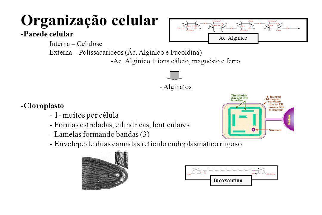 Organização celular -Parede celular Interna – Celulose Externa – Polissacarídeos (Ác.