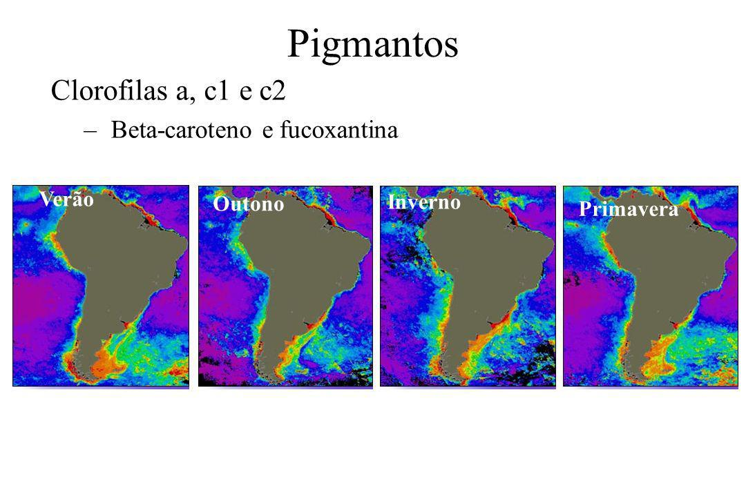 Pigmantos Clorofilas a, c1 e c2 – Beta-caroteno e fucoxantina Verão Outono Inverno Primavera