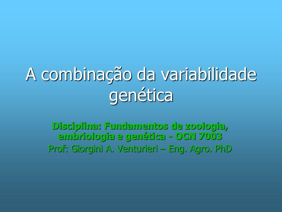 A invenção do sexo A mutação cria a variabilidade o sexo a recombina É a união entre indivíduos para gerar a recombinação de genes É a união entre indivíduos para gerar a recombinação de genes –Há espécies com sexos diferenciados.
