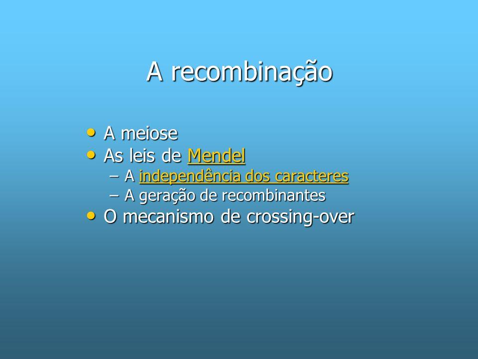 A recombinação A meiose A meiose As leis de Mendel As leis de MendelMendel –A independência dos caracteres independência dos caracteresindependência dos caracteres –A geração de recombinantes O mecanismo de crossing-over O mecanismo de crossing-over