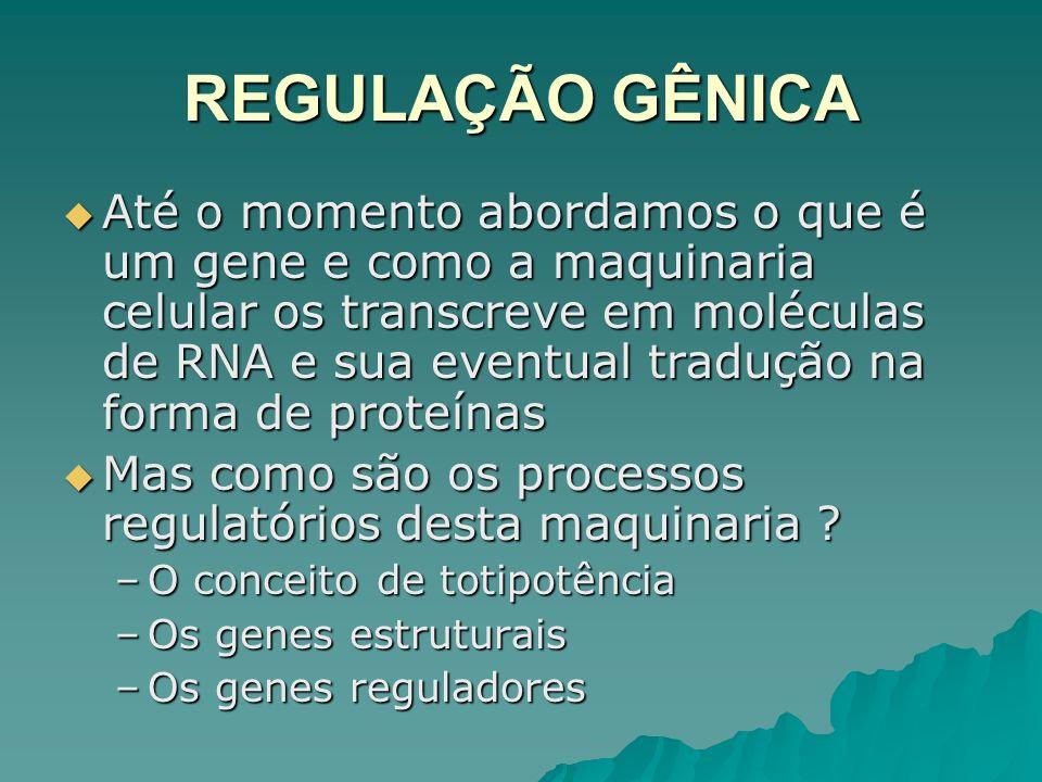 REGULAÇÃO GÊNICA Até o momento abordamos o que é um gene e como a maquinaria celular os transcreve em moléculas de RNA e sua eventual tradução na form