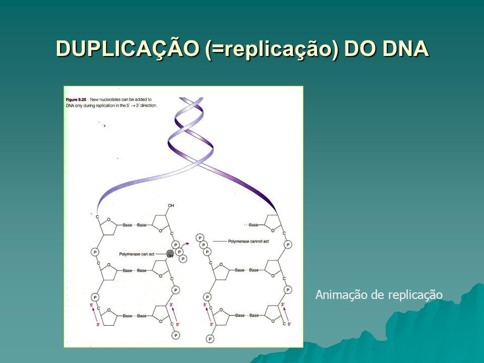 DUPLICAÇÃO (=replicação) DO DNA Animação de replicação