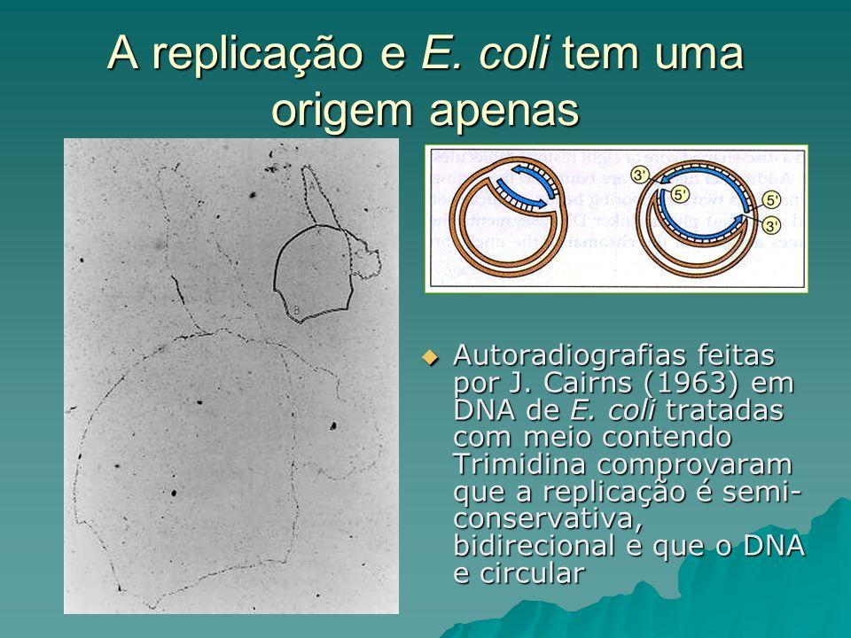 A replicação e E. coli tem uma origem apenas Autoradiografias feitas por J. Cairns (1963) em DNA de E. coli tratadas com meio contendo Trimidina compr