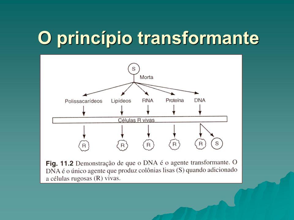 O princípio transformante