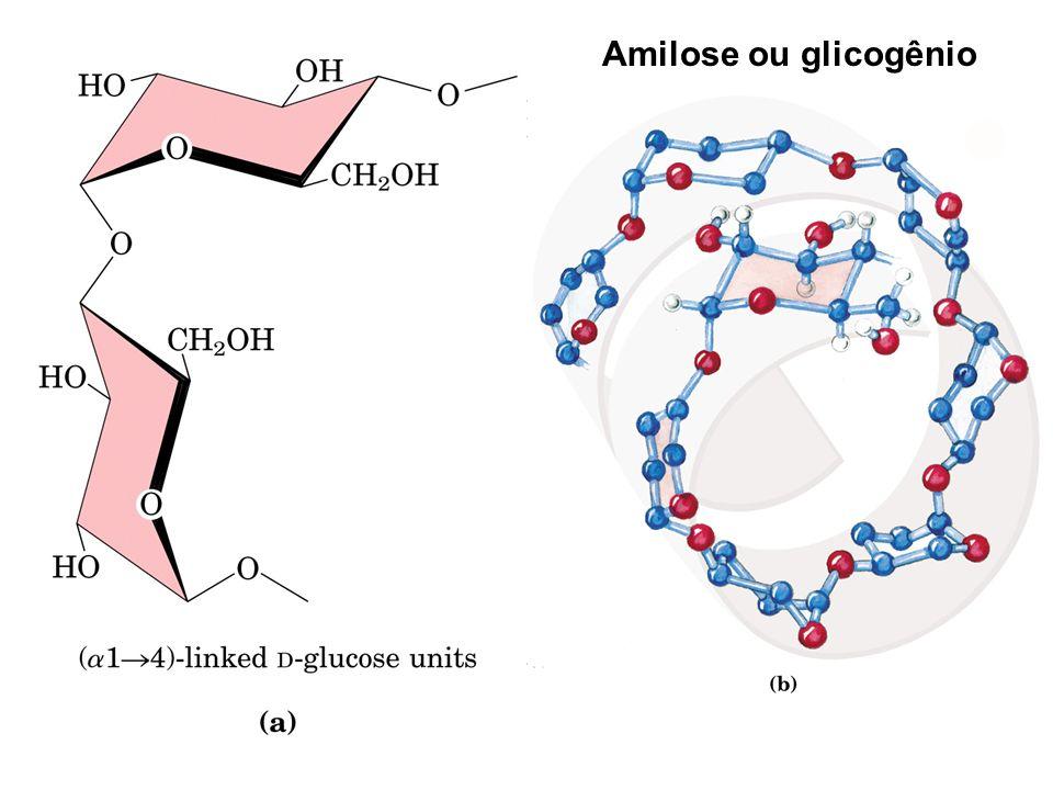 Amilose ou glicogênio