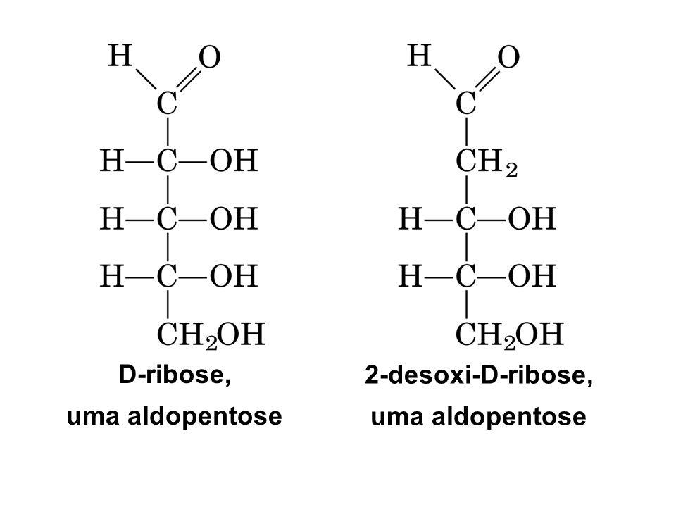 mutarotação D-glicose