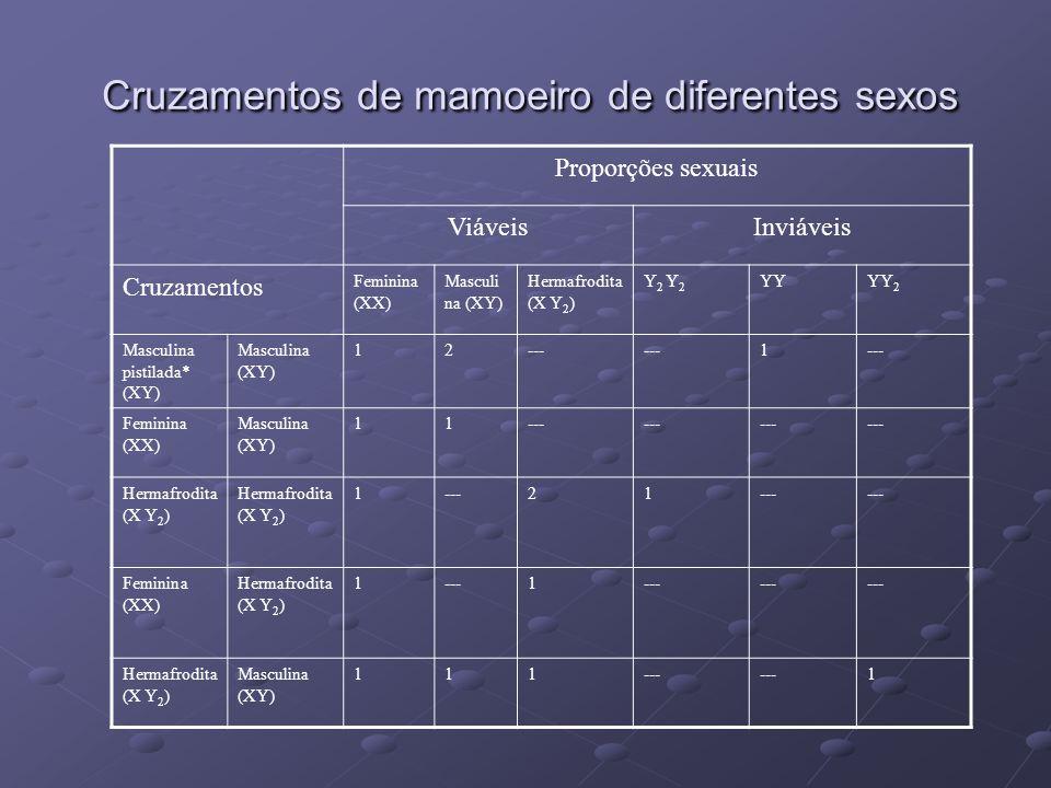 Cruzamentos de mamoeiro de diferentes sexos Proporções sexuais ViáveisInviáveis Cruzamentos Feminina (XX) Masculi na (XY) Hermafrodita (X Y 2 ) Y 2 YY