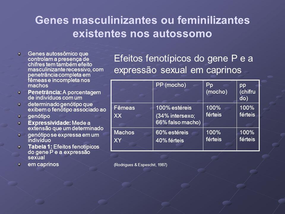 Genes masculinizantes ou feminilizantes existentes nos autossomo Genes autossômico que controlam a presença de chifres tem também efeito masculinizant