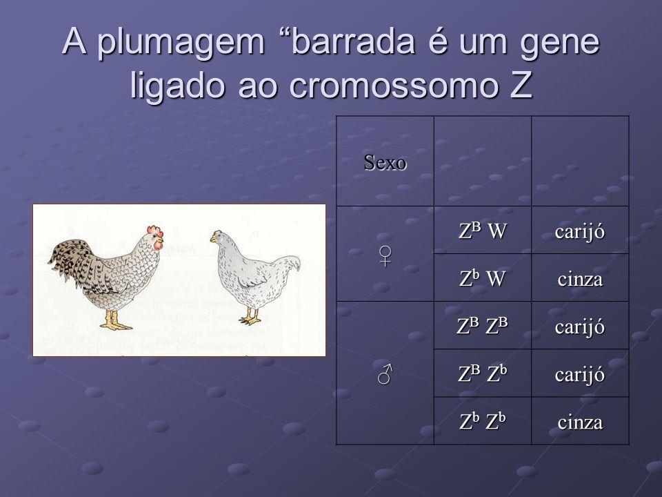 A plumagem barrada é um gene ligado ao cromossomo Z Sexo ZB WZB WZB WZB Wcarijó Zb WZb WZb WZb Wcinza ZB ZBZB ZBZB ZBZB ZBcarijó ZB ZbZB ZbZB ZbZB Zbc