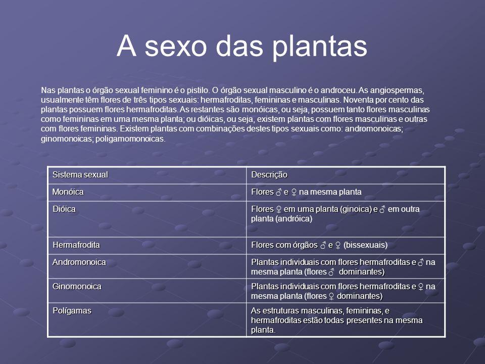 A sexo das plantas Nas plantas o órgão sexual feminino é o pistilo. O órgão sexual masculino é o androceu. As angiospermas, usualmente têm flores de t