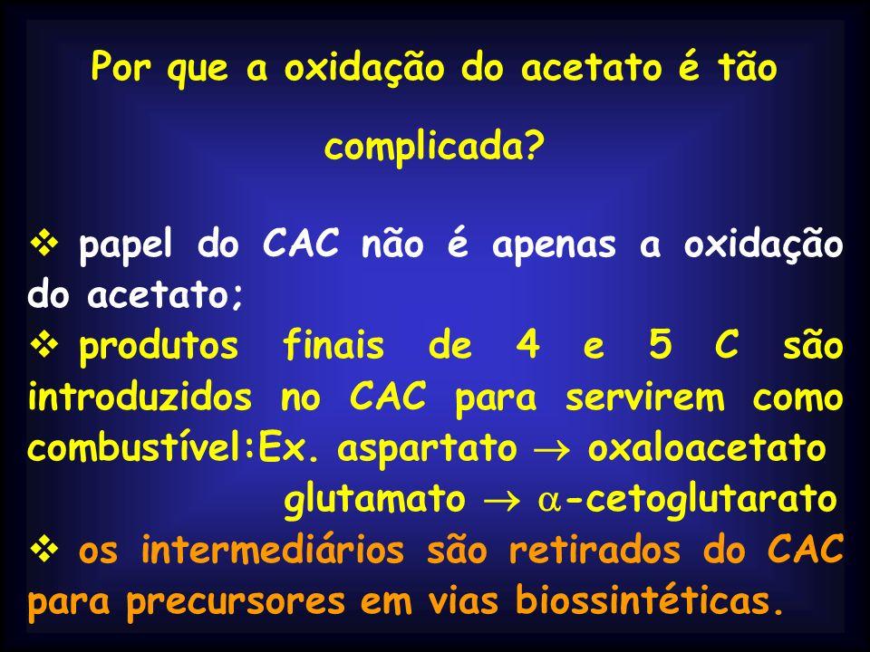 Por que a oxidação do acetato é tão complicada? papel do CAC não é apenas a oxidação do acetato; O ciclo do ácido cítrico é uma via ANFIBÓLICA;