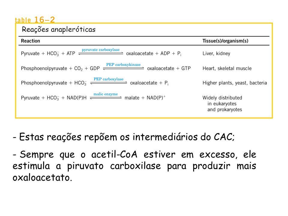 O ciclo do ácido cítrico é uma via ANFIBÓLICA Serve tanto a processos catabólicos quanto anabólicos. - Catabolismo oxidativo de carboidratos, ácidos g