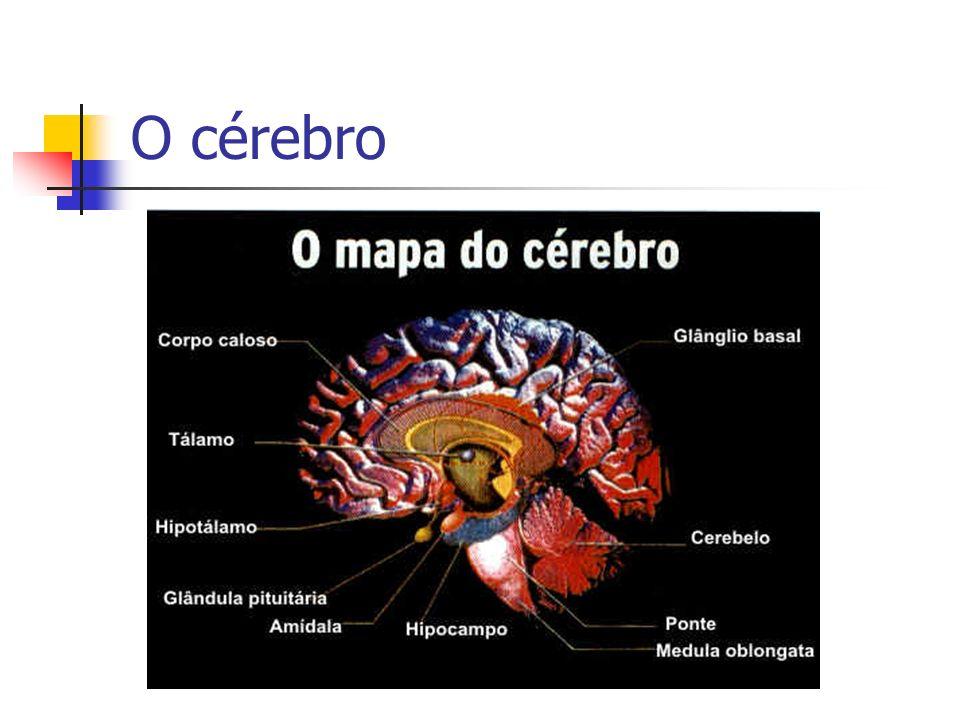 A Neurociência diz que uma criança pode aprender um conteúdo (aquisição de memória), mas não conseguir evocá-lo.