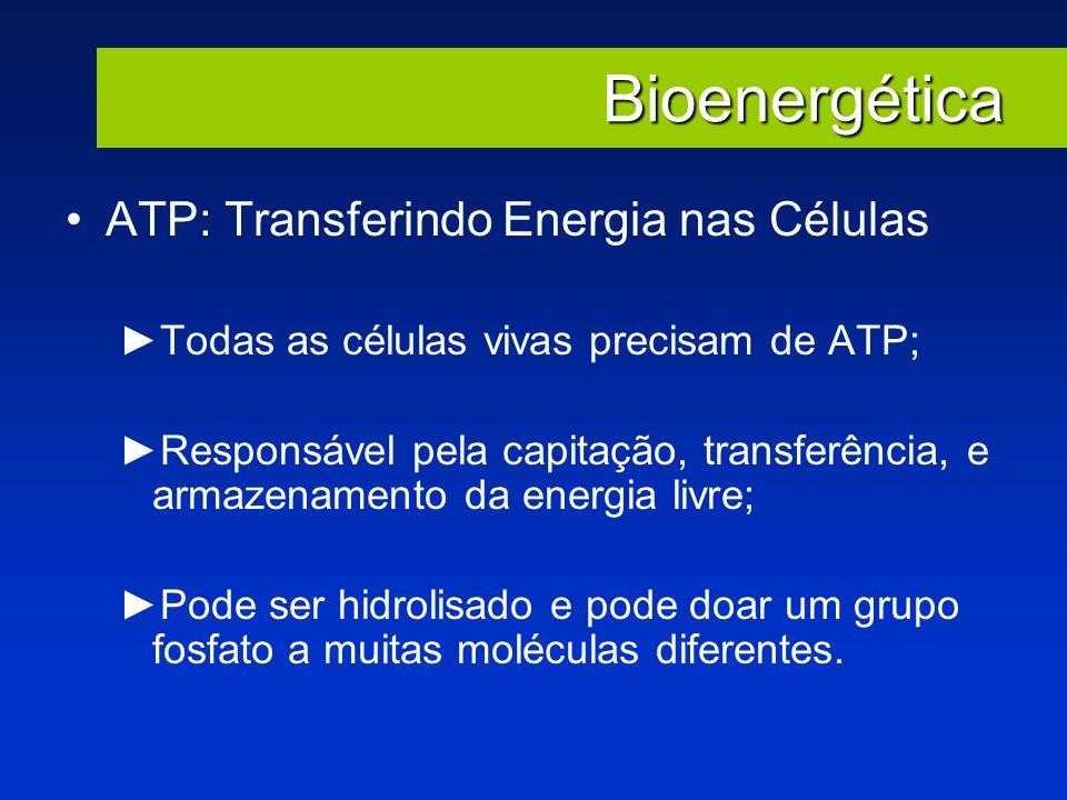 Bioenergética ATP: Transferindo Energia nas Células Todas as células vivas precisam de ATP; Responsável pela capitação, transferência, e armazenamento
