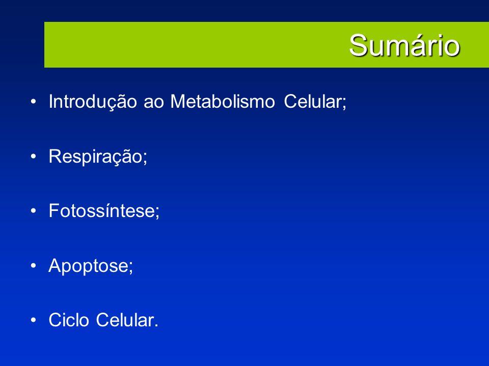Sumário Introdução ao Metabolismo Celular; Respiração; Fotossíntese; Apoptose; Ciclo Celular.