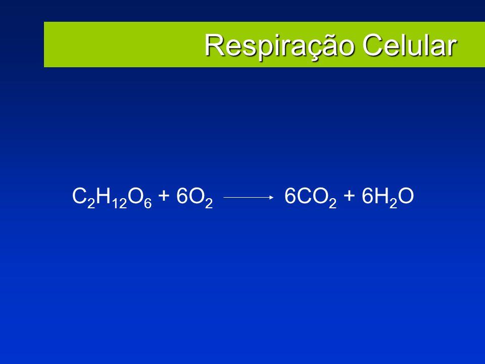 Respiração Celular C 2 H 12 O 6 + 6O 2 6CO 2 + 6H 2 O