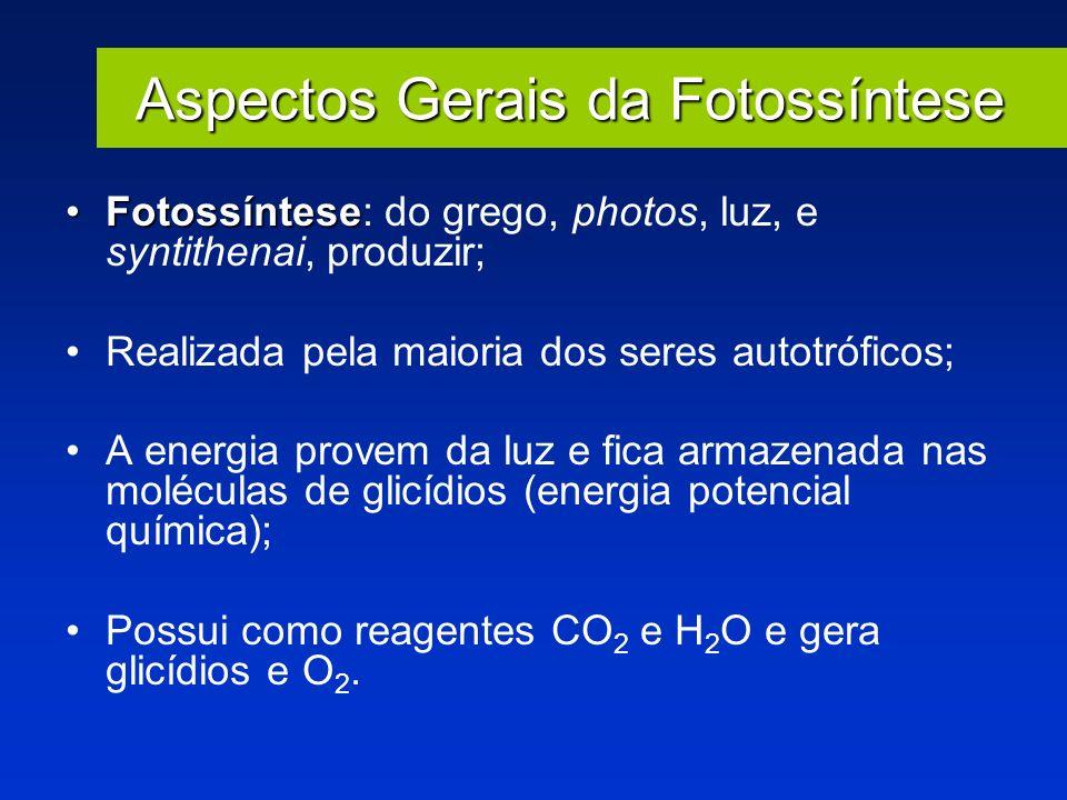 Aspectos Gerais da Fotossíntese FotossínteseFotossíntese: do grego, photos, luz, e syntithenai, produzir; Realizada pela maioria dos seres autotrófico