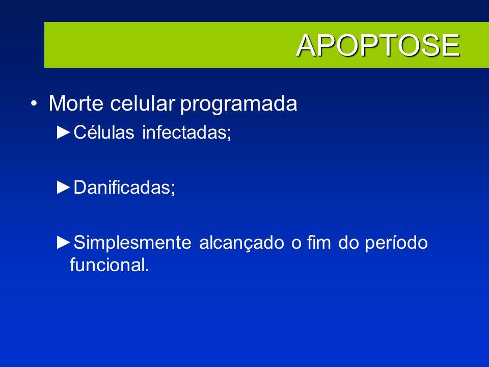 APOPTOSE Morte celular programada Células infectadas; Danificadas; Simplesmente alcançado o fim do período funcional.