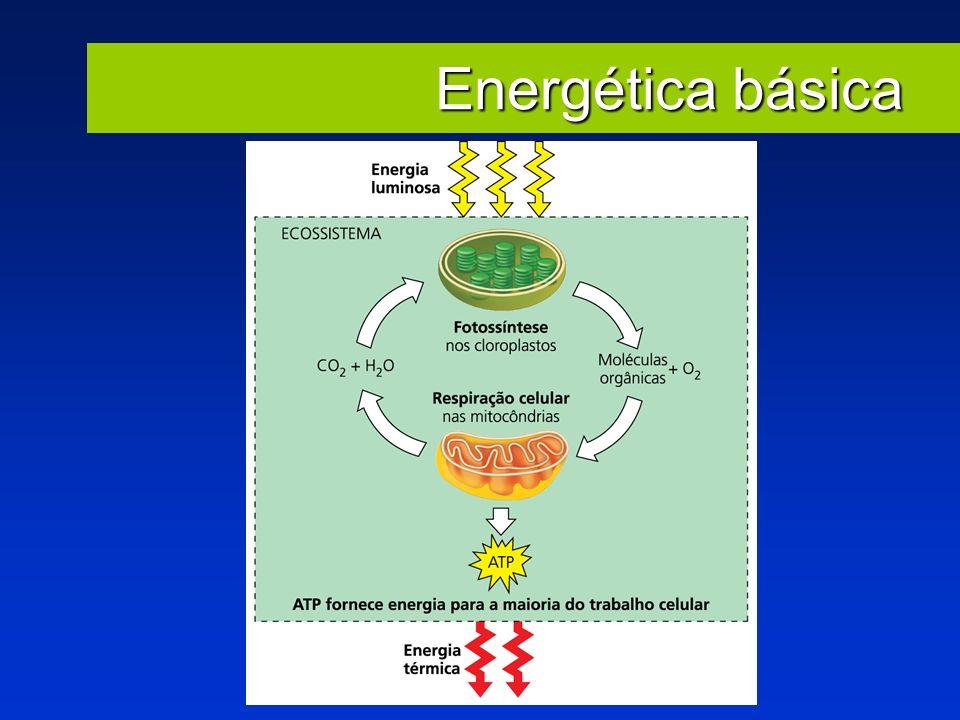 Energética básica