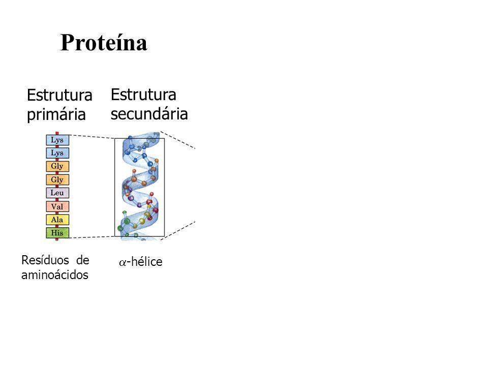 Estrutura primária Estrutura secundária Estrutura terciária Estrutura quaternária Resíduos de aminoácidos -hélice Cadeia polipeptídic a Subunidades montadas Proteína