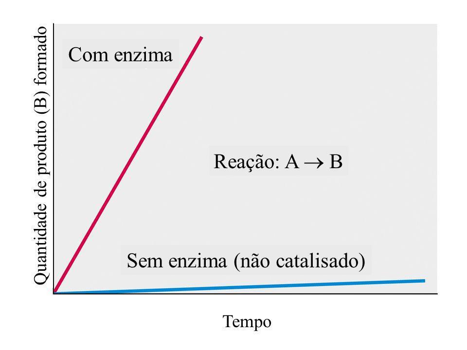 Tempo Quantidade de produto (B) formado Reação: A B Com enzima Sem enzima (não catalisado)