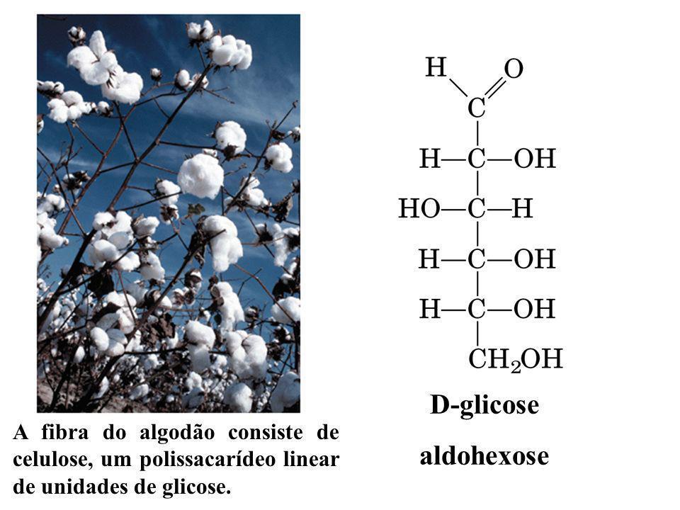 D-glicose aldohexose A fibra do algodão consiste de celulose, um polissacarídeo linear de unidades de glicose.