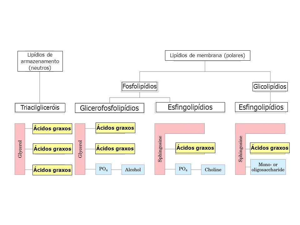 Lipídios de armazenamento (neutros) Lipídios de membrana (polares) Triacilgliceróis Fosfolipídios Glicerofosfolipídios Esfingolipídios Glicolipídios Á