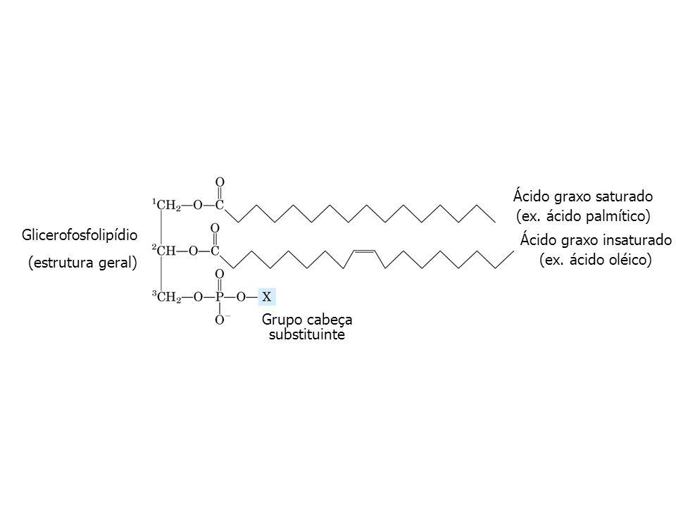 Glicerofosfolipídio (estrutura geral) Ácido graxo saturado (ex. ácido palmítico) Ácido graxo insaturado (ex. ácido oléico) Grupo cabeça substituinte