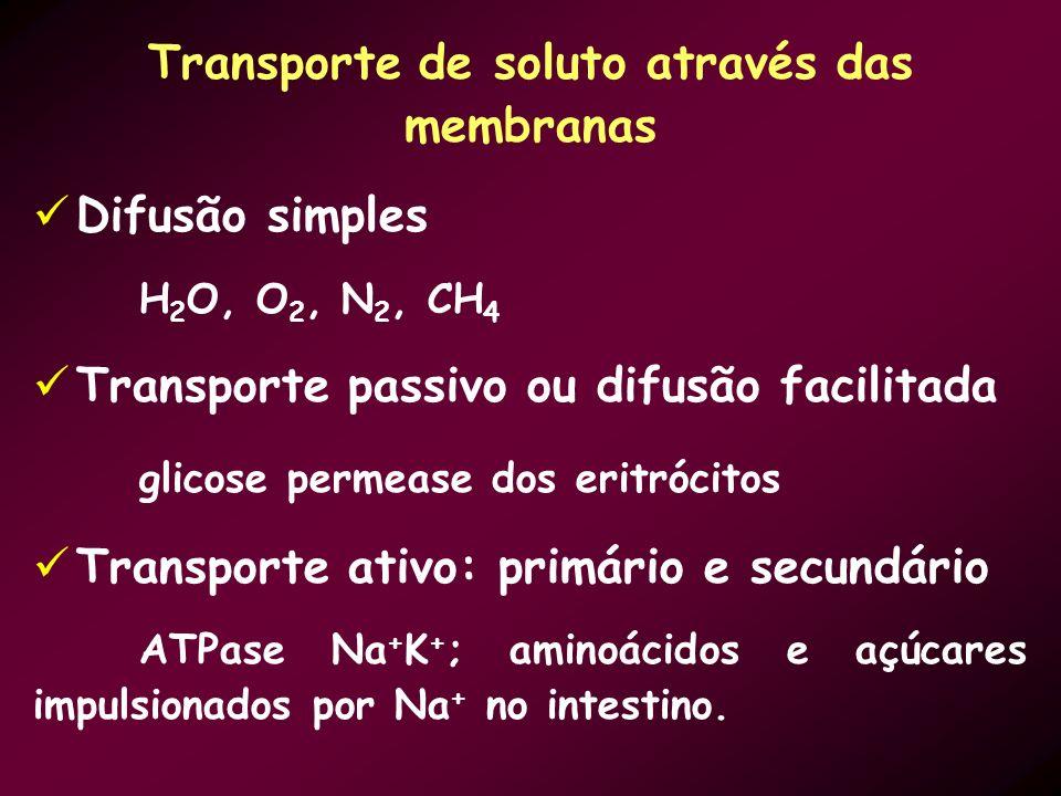 Transporte de soluto através das membranas Difusão simples H 2 O, O 2, N 2, CH 4 Transporte passivo ou difusão facilitada glicose permease dos eritróc