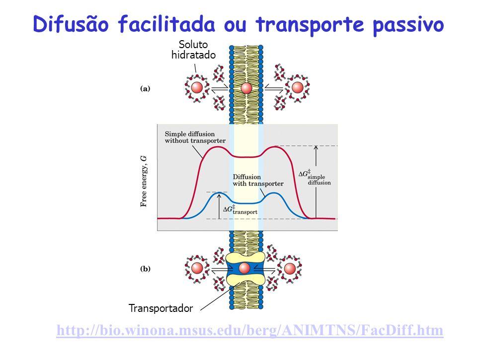 http://bio.winona.msus.edu/berg/ANIMTNS/FacDiff.htm Difusão facilitada ou transporte passivo Soluto hidratado Transportador