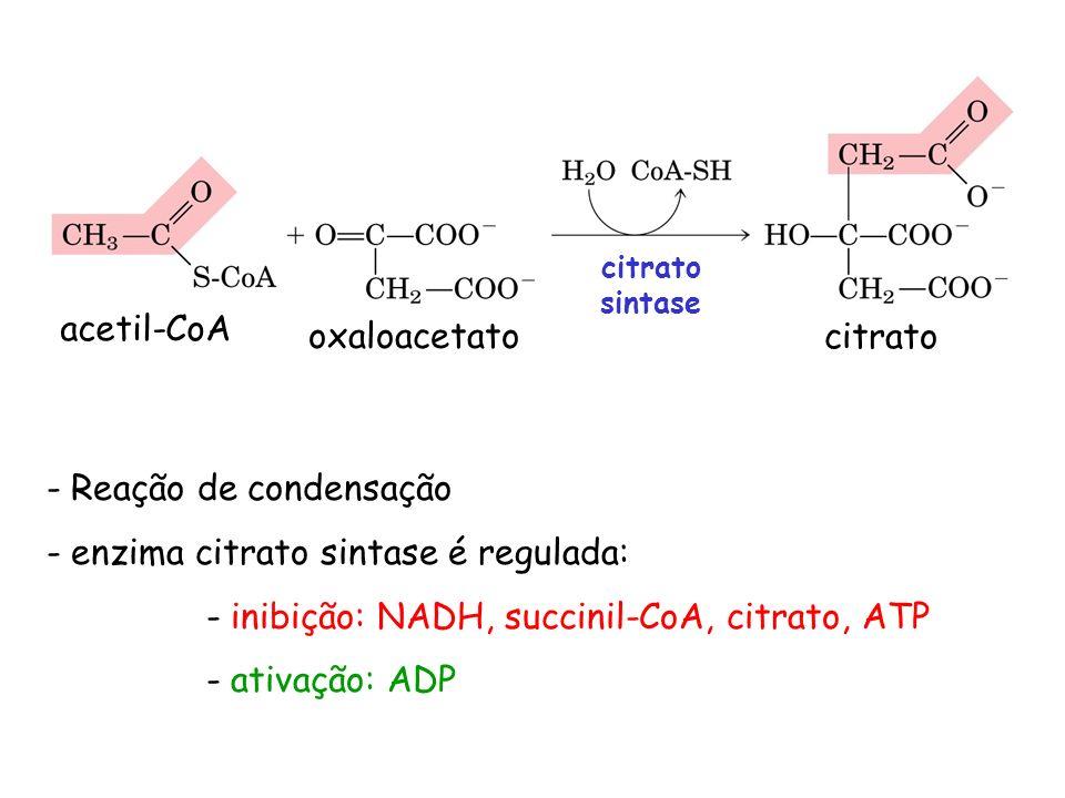 acetil-CoA oxaloacetato citrato citrato sintase - Reação de condensação - enzima citrato sintase é regulada: - inibição: NADH, succinil-CoA, citrato,