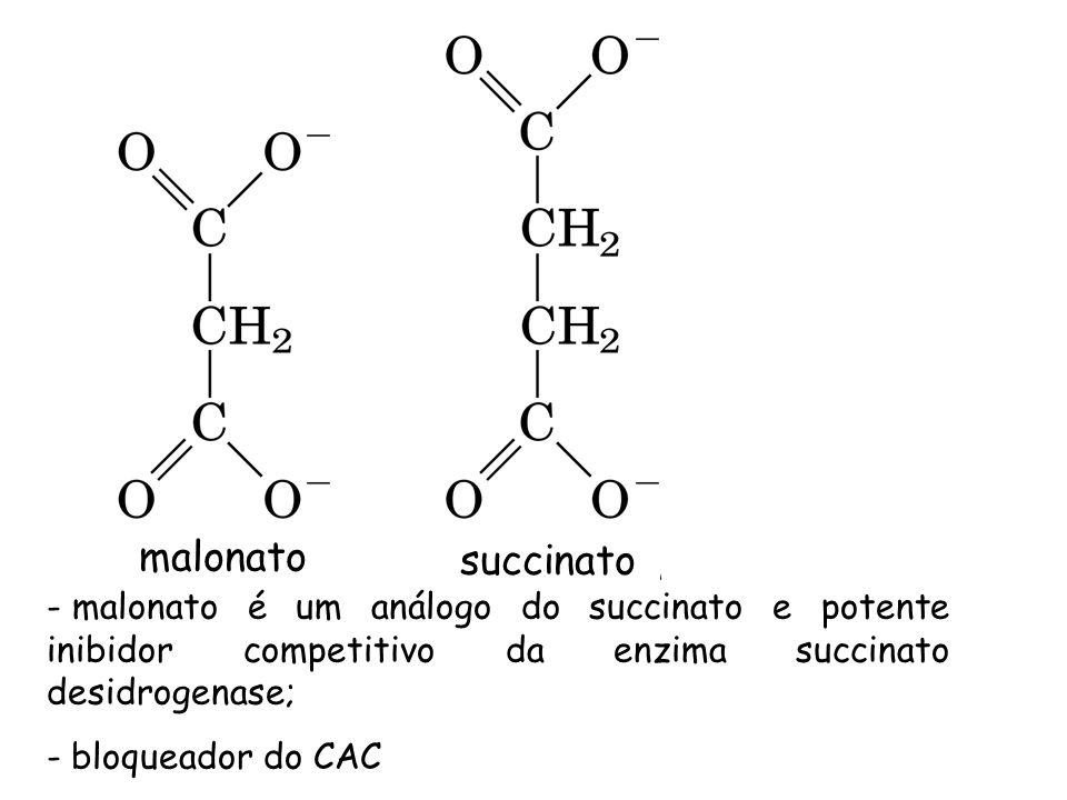 malonato succinato - malonato é um análogo do succinato e potente inibidor competitivo da enzima succinato desidrogenase; - bloqueador do CAC
