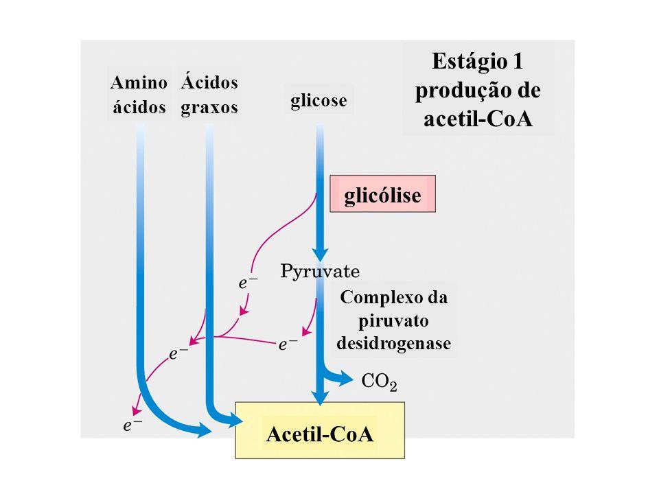succinil-CoA -cetoglutarato Complexo da -cetoglutarato desidrogenase - Reação de descarboxilação oxidativa - Regulação da -cetoglutarato desidrogenase: - inibição: succinil-CoA, NADH -Ativação: Ca ++