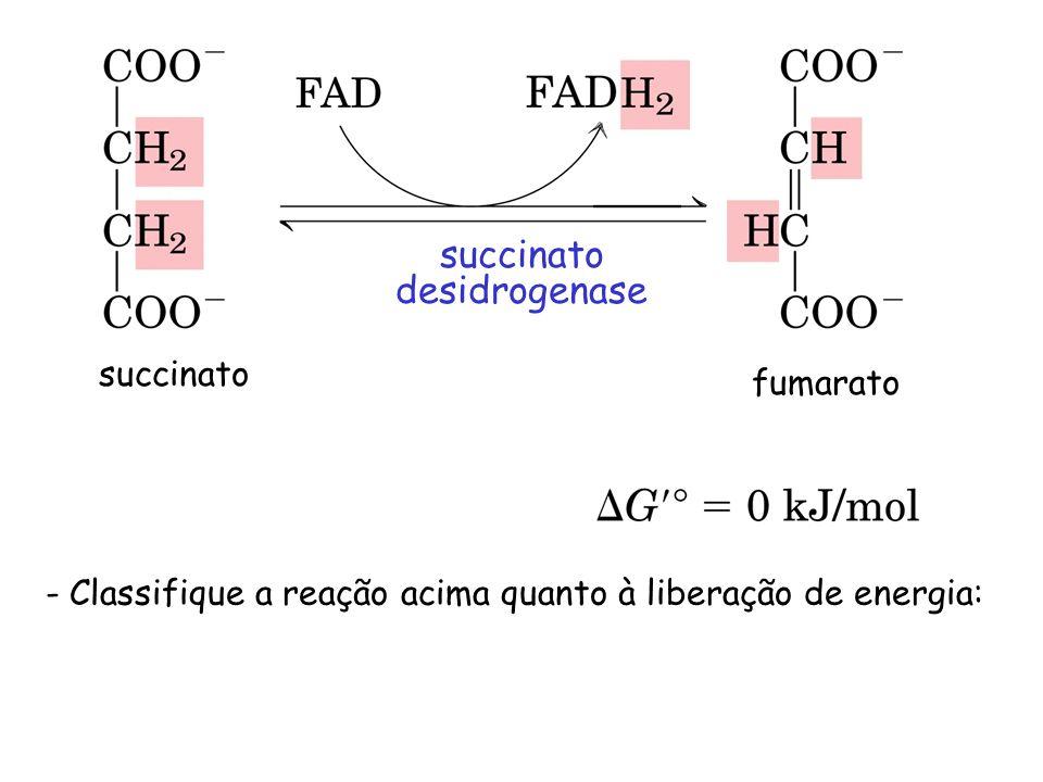 succinato desidrogenase succinato fumarato - Classifique a reação acima quanto à liberação de energia: