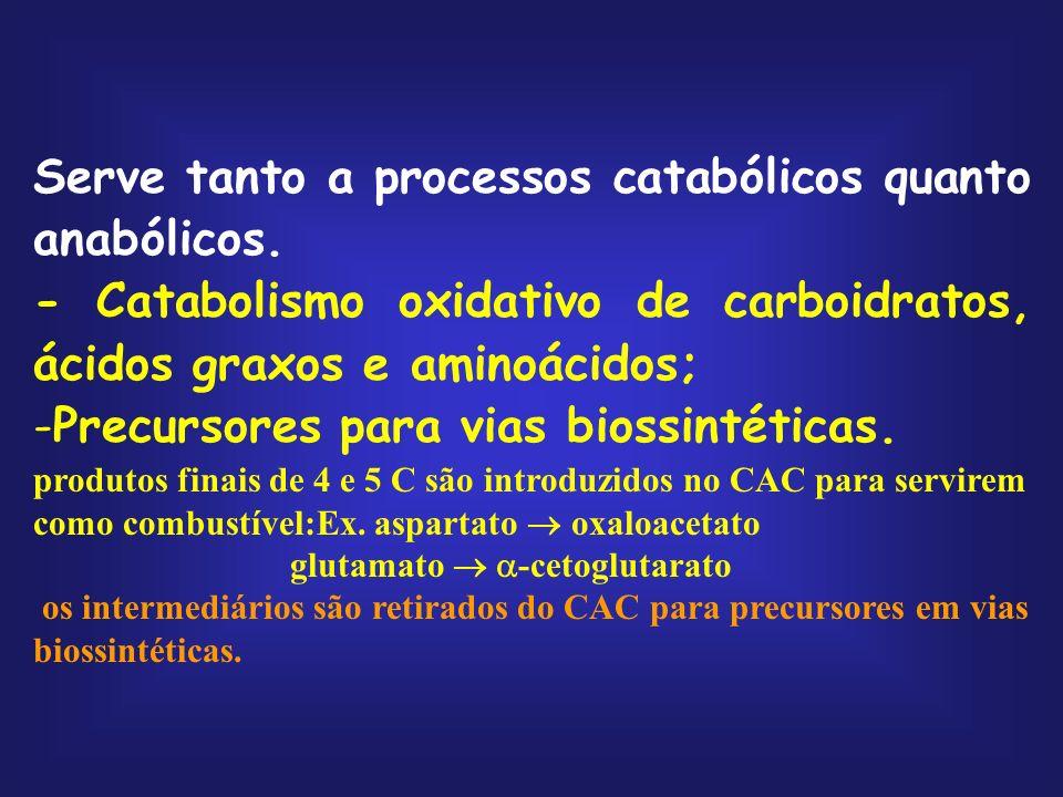 Serve tanto a processos catabólicos quanto anabólicos. - Catabolismo oxidativo de carboidratos, ácidos graxos e aminoácidos; -Precursores para vias bi
