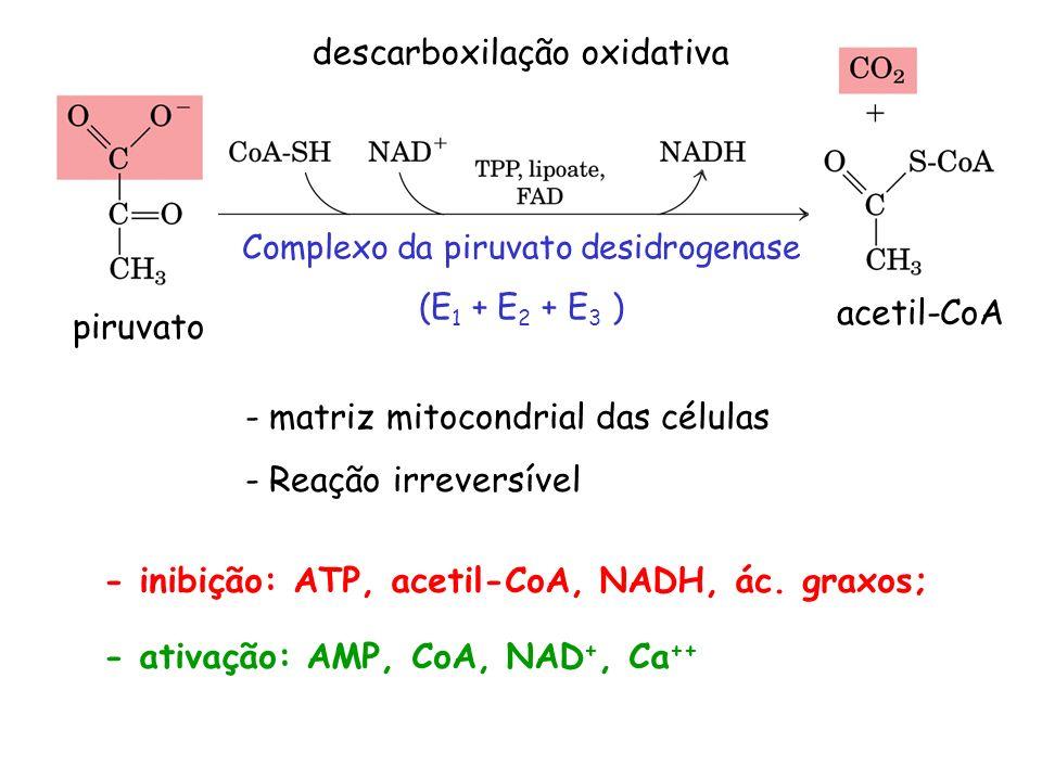 descarboxilação oxidativa - matriz mitocondrial das células - Reação irreversível Complexo da piruvato desidrogenase (E 1 + E 2 + E 3 ) piruvato aceti